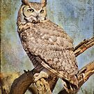 Owl in a Tree by Barbara Manis