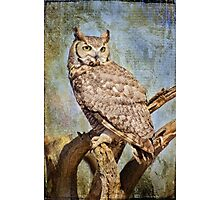 Owl in a Tree Photographic Print