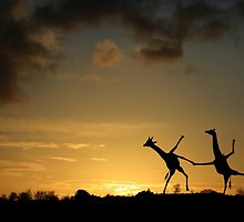 Happy Dancing Giraffes by Matt West