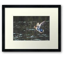 Duck, Duck and Away Framed Print