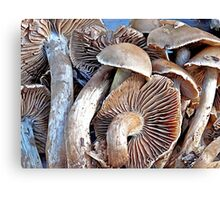 A Gathering of Gills Canvas Print