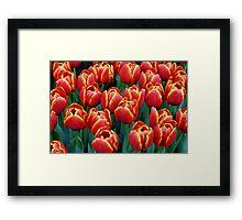 Vibrant Tulips Framed Print