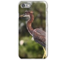 Tri Colored Heron iPhone Case/Skin