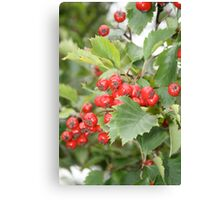 Red Haw Canvas Print