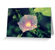 Morning Glory up a Mesquite Tree  Greeting Card