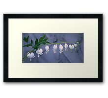 White Bleeding Heart Framed Print
