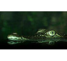 Saltwater Crocodile Photographic Print