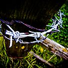 Barbed Wire  by Simon Bowker