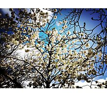 Spring Is Here Photographic Print