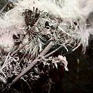 Unfriendly Foliage by Simon Bowker