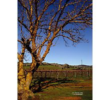 photoj South Australia Barossa Valley Photographic Print