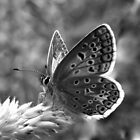 Butterfly in Black and White by ienemien