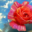 ROSE IN THE SKY by terezadelpilar ~ art & architecture