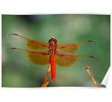 Orange Dragon Poster