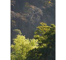 trees - arboles Photographic Print