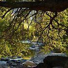 morning at the river cuale - mañana en el rio cuale by Bernhard Matejka