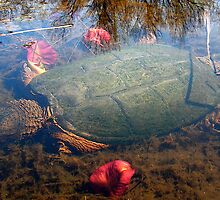 Snapping Turtle (Submerged) by main1