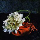 Dalhia by Karo / Caroline Evans (Caux-Evans)