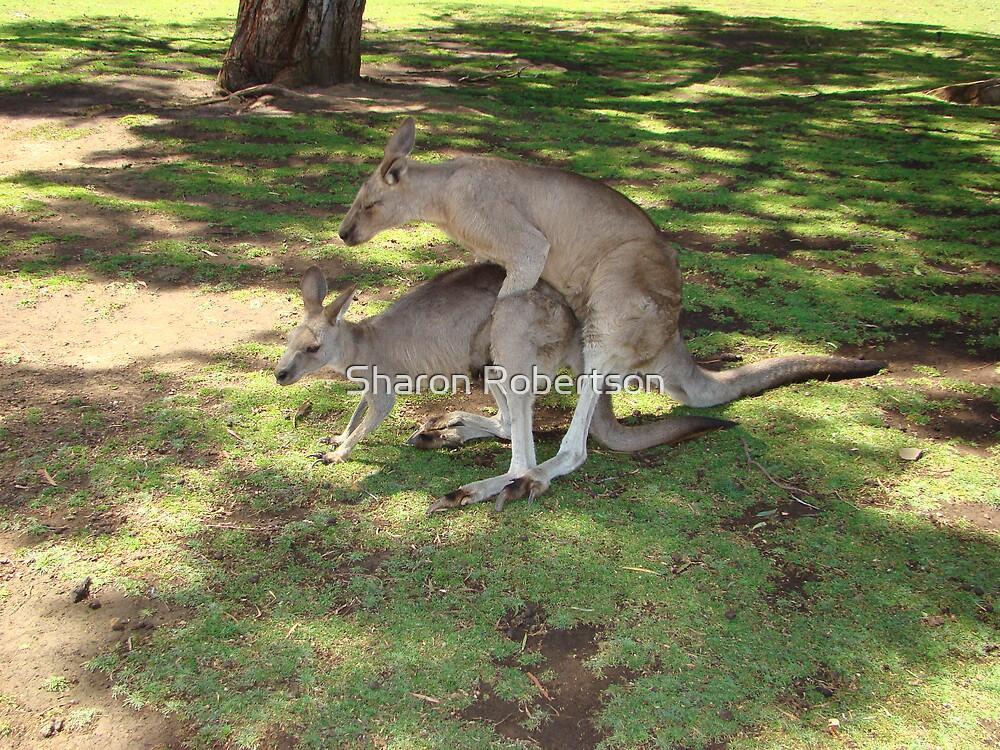 18+ Kangaroos by Sharon Robertson