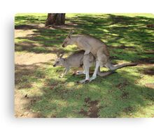 18+ Kangaroos Canvas Print