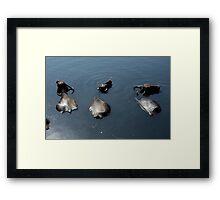 Three Buffalo Framed Print