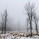 In the Fog by AbigailJoy