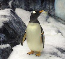 Penguin at Seaworld Orlando, FL by ShamuRocks7