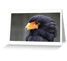 Bateleur Eagle Portrait Greeting Card
