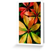 Natures Colours  Greeting Card