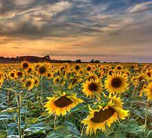 when the sun goes down... by Stefan Trenker