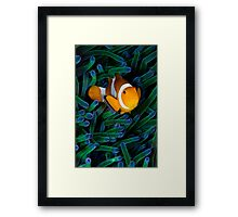 Anemonefish V Framed Print