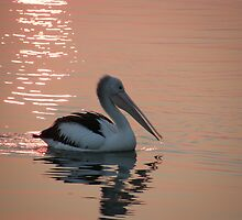 "Pelican ""Bush fire sunset"" by marlogm"