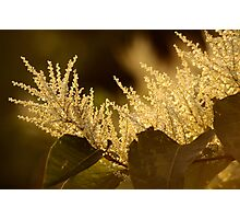 Touch Of Gold Photographic Print