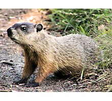 GROUNDHOG Photographic Print