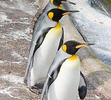 Penguins by Graeme  Hunt
