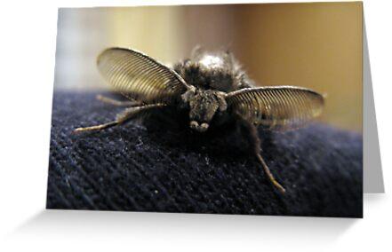 Night butterfly by Kagara