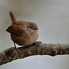 Wren by Peter Wiggerman