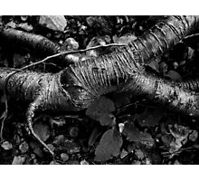 Undergrowth Photographic Print