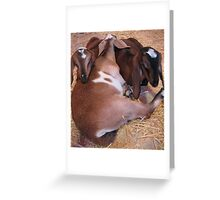 Snuggling for warmth Greeting Card