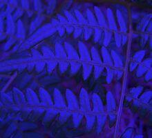 Blue Fern by HELUA