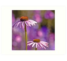 Purple Coneflowers. Art Print