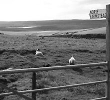 """UK: """"This Way to Norse Farmstead"""", Shetland Islands by Kelly Sutherland"""