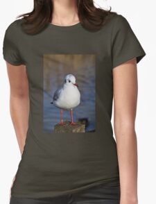 Black-headed Gull Womens Fitted T-Shirt