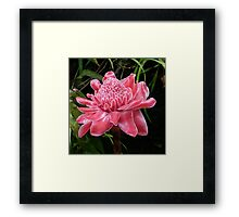Red Torch Ginger Lily Framed Print