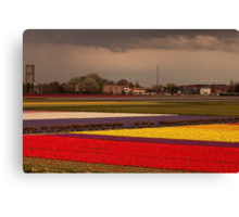 Black Cloud Heralds Rain Over Tulip Fields Canvas Print
