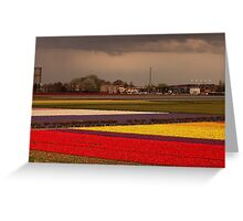 Black Cloud Heralds Rain Over Tulip Fields Greeting Card