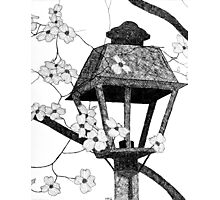 Narnia's Lamppost Photographic Print