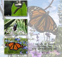 Monarch Collage by back40fotos