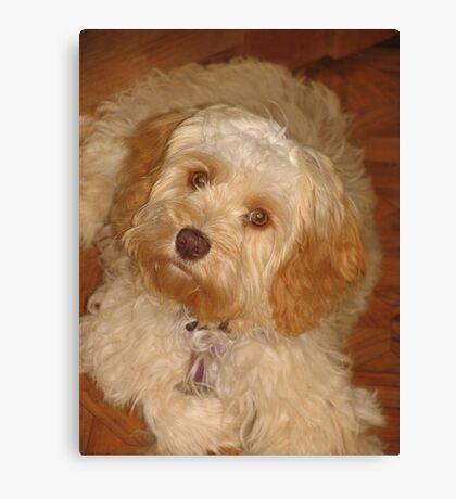 Monty dog,  Canvas Print