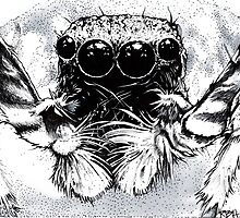 Tarantula -  Along Came a Spider by richard b. hamer